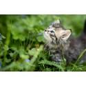 Acana Cat Grasslands 5.4 kg, cadou recompense WeelFed cu peste si iarba pisicii 50g