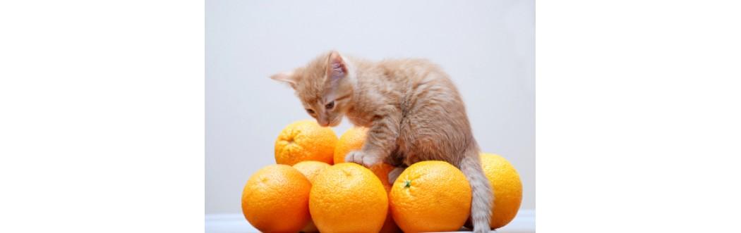 Suplimente pisici